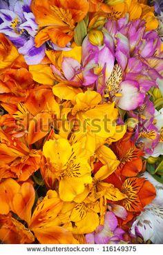 Floral Texture Stock Photos, Floral Texture Stock Photography, Floral Texture Stock Images : Shutterstock.com