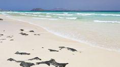 EN IMAGES. Îles Canaries: les plus belles plages