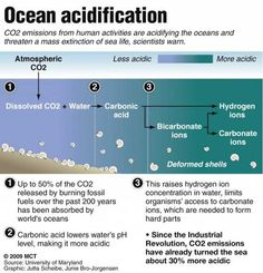 Why you should care about ocean acidification Science Geek, Science Lessons, Science For Kids, Earth Science, Save Our Oceans, Environmental Education, Environmental Science, Einstein, Argentina
