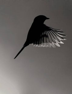 Image result for bird flying from shadow to sun splash in autumn pinterest