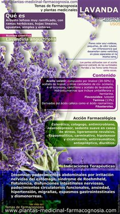 Natural Medicine, Herbal Medicine, Health And Nutrition, Health And Wellness, Herbal Remedies, Natural Remedies, Herbs For Health, Naturopathy, Medicinal Plants