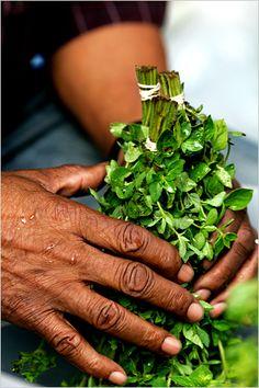 List & Explanation of Healing Herbs