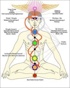 The Caduceus as symbol of chakra activation.