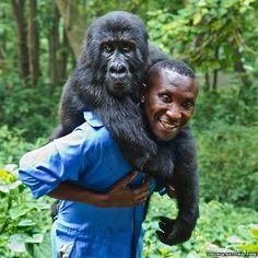 "Andre Bauma with Ndakasi - ""I felt obliged to stay with the gorillas here,"" Bauma says. ""You must justify why you are on this earth - gorillas justify why I am here, they are my life. So if it is about dying, I will die for the gorillas."""