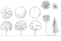 Learn how to draw trees in architecture | Drawing Tutorials | ARCH-student.com