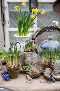 HWIT BLOG: FLOWERS by Titti & Ingrid - Spring bulbs! (ww: a beautiful blog from Sweden)