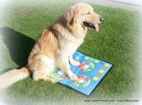 Dogs, Animals, Living Alone, Animales, Animaux, Doggies, Animal, Pet Dogs, Animais