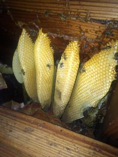 We found bees inside the walls of one of the 3rd floor bedrooms.