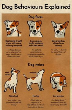 A Chart That Will Help You Finally Understand Your Dog #DogsStuff