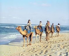 Camel safari, Nusa dua #bali