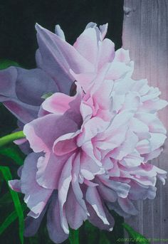 Reflected Peony Light - size 21 x 14.5in - price $2500