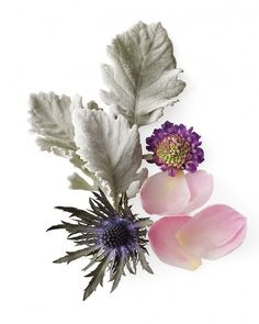 English-country look. Garden Pallete  Silver leaves (such as dusty miller) mesh well with soft pink, blue, and lavender blooms.