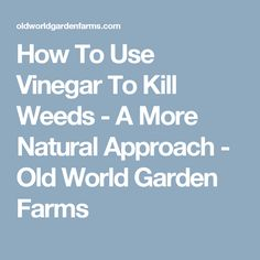 How To Use Vinegar To Kill Weeds - A More Natural Approach - Old World Garden Farms