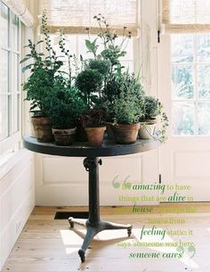 Collection of indoor plants, side table ideas