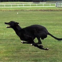 Cheetah vs Greyhound - World's Fastest Dog In Super Slow Motion by Earth Unplugged, films these extremely fast animals with high speed cameras, breaks down their movements, and how they achieve such speed.
