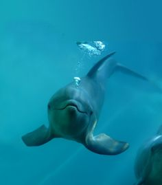 I love dolphins. The best animal