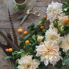 morning juice  thank you @vegamarie for raiding your kumquat trees .. dahlias .. cafe au lait dahlias .. Camelback Flowershop