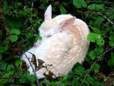 sweet albino deer