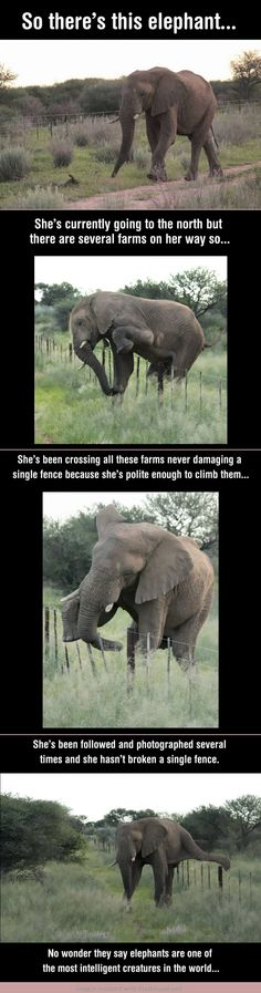 Aww, elephants are lovely. Those fences shouldn't be in her way begin with.