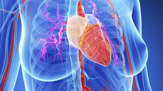 Herzinfarkt zählt zu den häufigsten Todesursachen bei Frauen. Manche Warnsigna le treten bereits Monate im Voraus auf. Wir sagen, worauf Sie achten müssen.