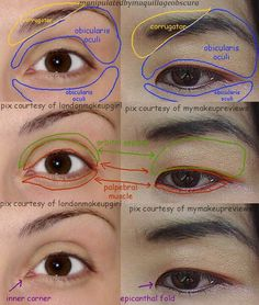 Asian and Caucasian eye anatomy.