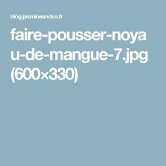 faire-pousser-noyau-de-mangue-7.jpg (600×330)