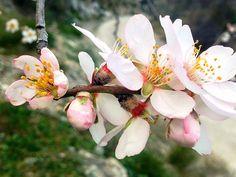 #almendroenflor #mandelblüte #mandelblüteandalusien #andalusien Wanderwege für die Mandelblüte in Andalusien