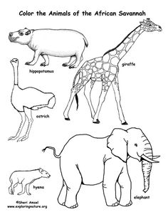 Savanna African Animals Coloring Page