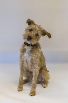 Terrier by Nigel Lomas on 500px