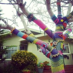 crochet-bombed tree -- California (photo by Annie Addlesperger)