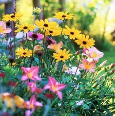 Energize a sleepy yard with easy-to-grow perennial partners perfectly suited to Midwest summers.