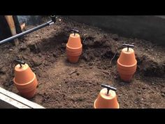 Save Water While Still Getting the Best Results by Installing Ollas in the Garden - YouTube
