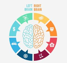 Left and right brain infographic Free Vector