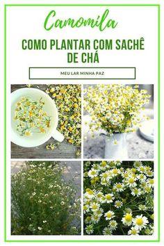 Garden Plants, House Plants, I Coming Home, Easy Garden, Sustainable Living, Bonsai, Food Art, Gardening Tips, Planting Flowers