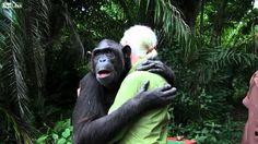 L' abbraccio commovente dello scimpanzé Wounda a Jane Goodall