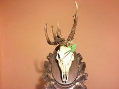 Roebuck Trophy - Prepared