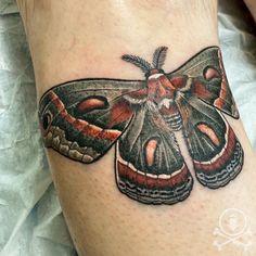 Fresh and beautiful moth tattoo by Mehgan Patrick. #12ozstudios #team12oz #tattoo #tattoos #tattooed #tattooing #tattooism #tattooart #tattooartist #tattooer #tattooist #art #artstudio #tattooshop #tattoostudio #ink #inked #colortattoo #colortattoos #moth #moths #mothtattoo #mothtattoos #nature #naturetattoo #animal #animaltattoo #insect #insecttattoo Insect Tattoo, Moth Tattoo, Meghan Patrick, Nature Tattoos, Custom Tattoo, Tattoo Shop, Color Tattoo, Tattoo Studio, Cool Artwork