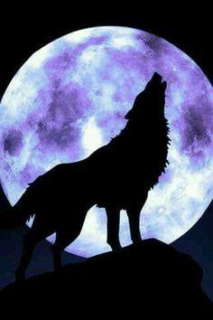New Wolf Spirit Animal Art Full Moon Ideas Wolf Tattoos, Tier Wolf, Animals Beautiful, Cute Animals, Wolf Painting, Wolf Wallpaper, Wolf Pictures, Wolf Spirit, Beautiful Moon