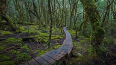 Picture of the day for March 30 2017 at by Bing; An elevated trail at Cradle Mountain-Lake Saint Clair National Park in Tasmania Australia ( Sean Crane/Minden Pictures) Parc National, National Parks, Wallpaper Pc, Wallpaper Gallery, Image Of The Day, Daily Photo, Tasmania, Western Australia, Pathways