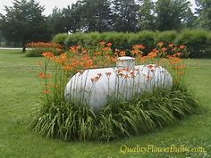 Many people have obstacles on their property that they would like to hide or dress up.  For instance, take this ugly 500-gallon propane tank that sits in the wide open. To make it more appealing three seasons of the year, native daylily flowers were planted in a border around the tank.