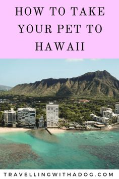 If you're moving to Hawaii or would like to travel through learn how you can take your dog with you. Moving To Hawaii, Hawaii Travel, Thailand Travel, Croatia Travel, Bangkok Thailand, Top Travel Destinations, Nightlife Travel, Holiday Destinations, Travel List