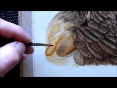 Harris Hawk Bird Watercolour Painting Tutorial - How to paint a feather - YouTube