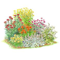 Oceanfront Garden- The ultratough plants in this garden plan hold up well to harsh, seaside conditions and look great through the year. Even if you don't live on the coast, this garden is virtually care free.    Garden size: 14 by 9 feet