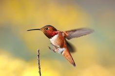Landing! | Flickr -