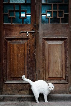 [Shanghai Discovery]Cats in the Lane(Longdang) of Shanghai