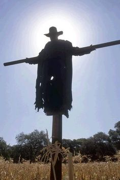 jeepers creepers in the corn maze | Thread: Working in Haunted cornfield this fall, need ideas