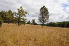 Willisbrook Preserve in Sept 2015 with native meadow