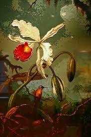 Crystal Bridges - Vik Muniz - White Brazilian Orchid after Martin Johnson Heade Botanical Drawings, Botanical Prints, Martin Johnson Heade, Hudson River School, Your Paintings, Flower Paintings, Bird Illustration, Oil Painting Reproductions, Bird Art