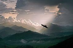 Crow flying over the Himalayas (Matthieu Ricard)