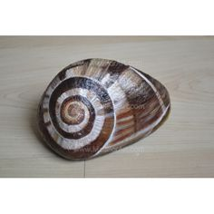 customizable-art-painted-stone-snail-oil-paints-500x500.jpg (500×500)